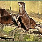 """"""" Baby Otters waiting for Breakfast"""" by Malcolm Chant"""
