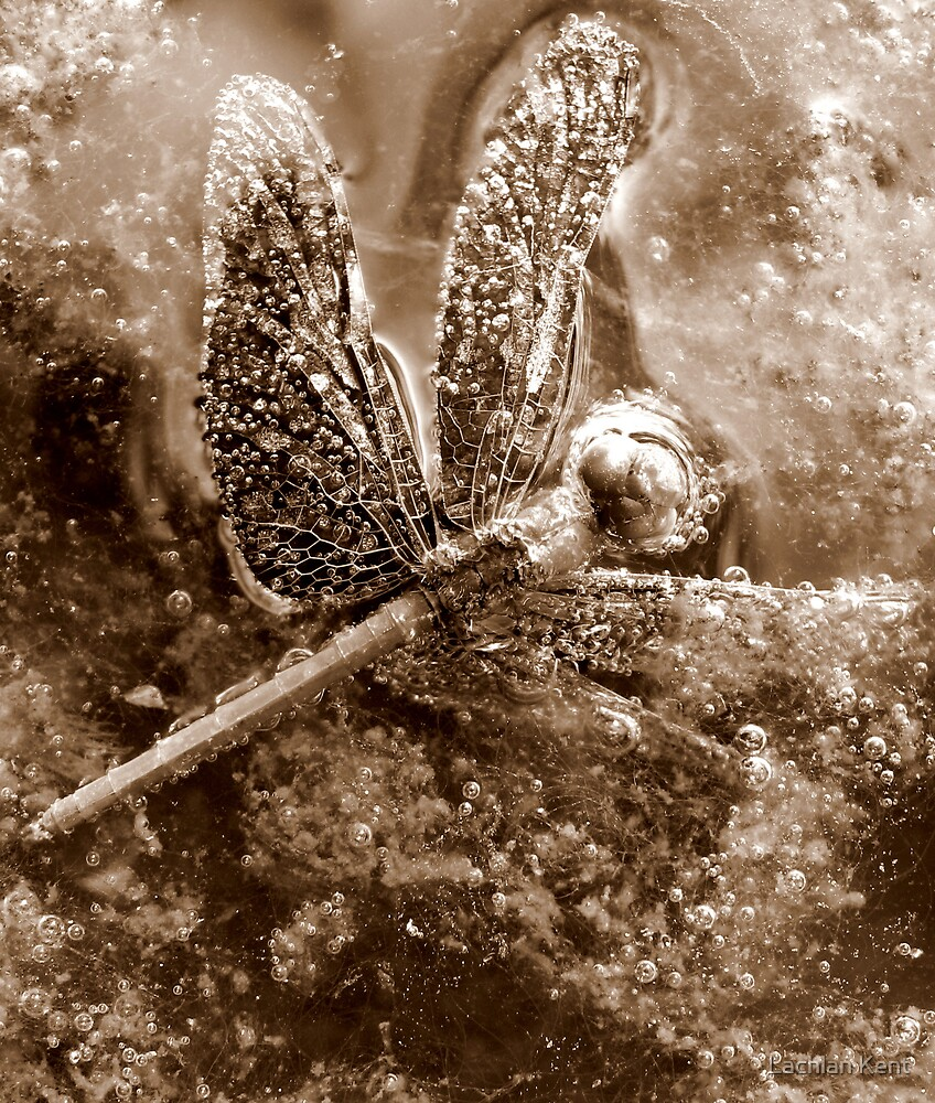 Death of a Dragonfly - in sepia by Lachlan Kent