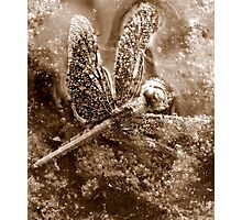 Death of a Dragonfly - in sepia Photographic Print