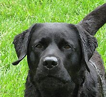 Said with Expression - Black Labrador by BlackDogArtJudy