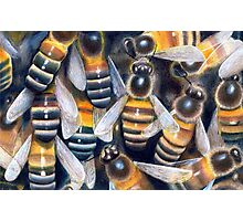 Bees Photographic Print