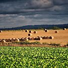 Roughage by naturelover