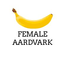 Female aardvark Photographic Print