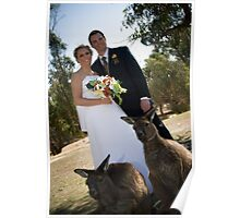 Wedding wallabies Poster