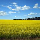 Canola growing in Western Victoria, Australia by Bev Pascoe