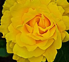 A Big Splash of Yellow by John Butler