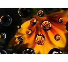 Daisy drops Photographic Print