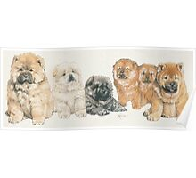 Chow Chow Puppies Poster