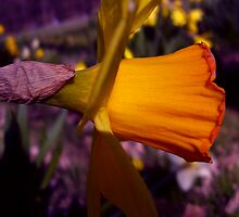 Contrast by tonymm6491