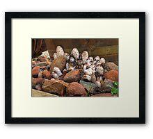 Fungi Group Framed Print