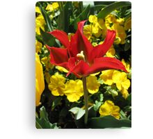 Red Tulip detail Canvas Print