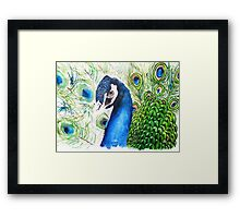 Indian Blue Peacock Watercolour Painting Framed Print
