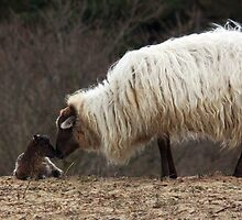 Mother Love by Jo Nijenhuis