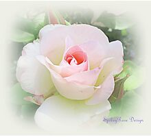 Pale Pink Rose Photographic Print