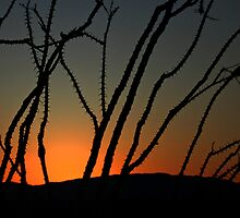 Ocotillo Sunset by CarolM