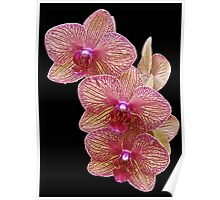 Orchid Magic Poster
