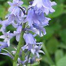 Purple flower by JenniferLouise