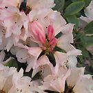 Pink flower by JenniferLouise