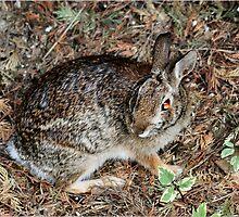 Woodland Creature by shadyuk