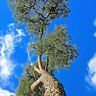 Pine in the Sky by John Thurgood