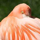 Pink Flamingo by hugbunny