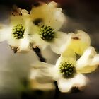 White Dogwood Impression by Darlene Lankford Honeycutt
