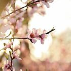 Spring Light by AbigailJoy
