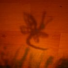 Dragonfly Shadow by darthsy