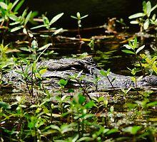 Aligator closeup 1 by MKWhite