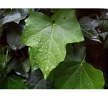 The dripping leaf Photographic Print