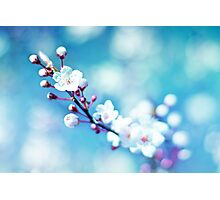 A taste of spring Photographic Print