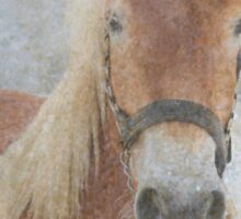 Winter Horse  - JUSTART © Sticker