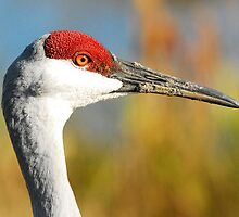 face of a sandhill crane. by anibubble