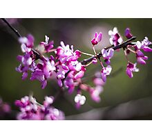Purple Bloom Photographic Print