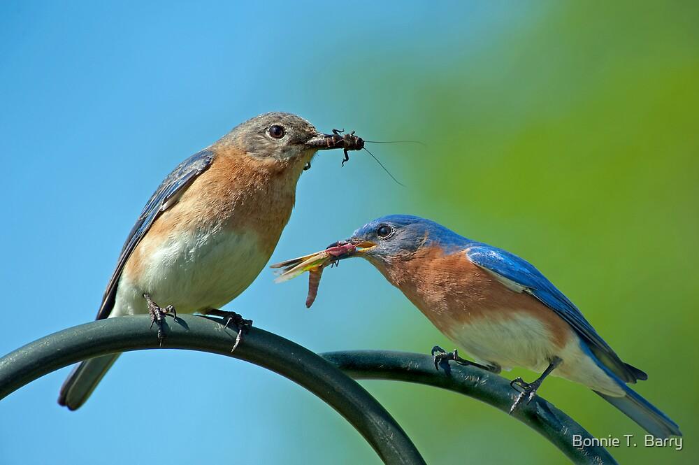 McDonald's Bluebird Style by Bonnie T.  Barry