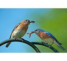 McDonald's Bluebird Style Photographic Print