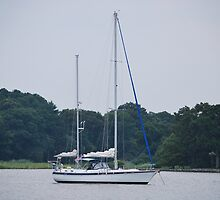 Sailboat by sarahshanely