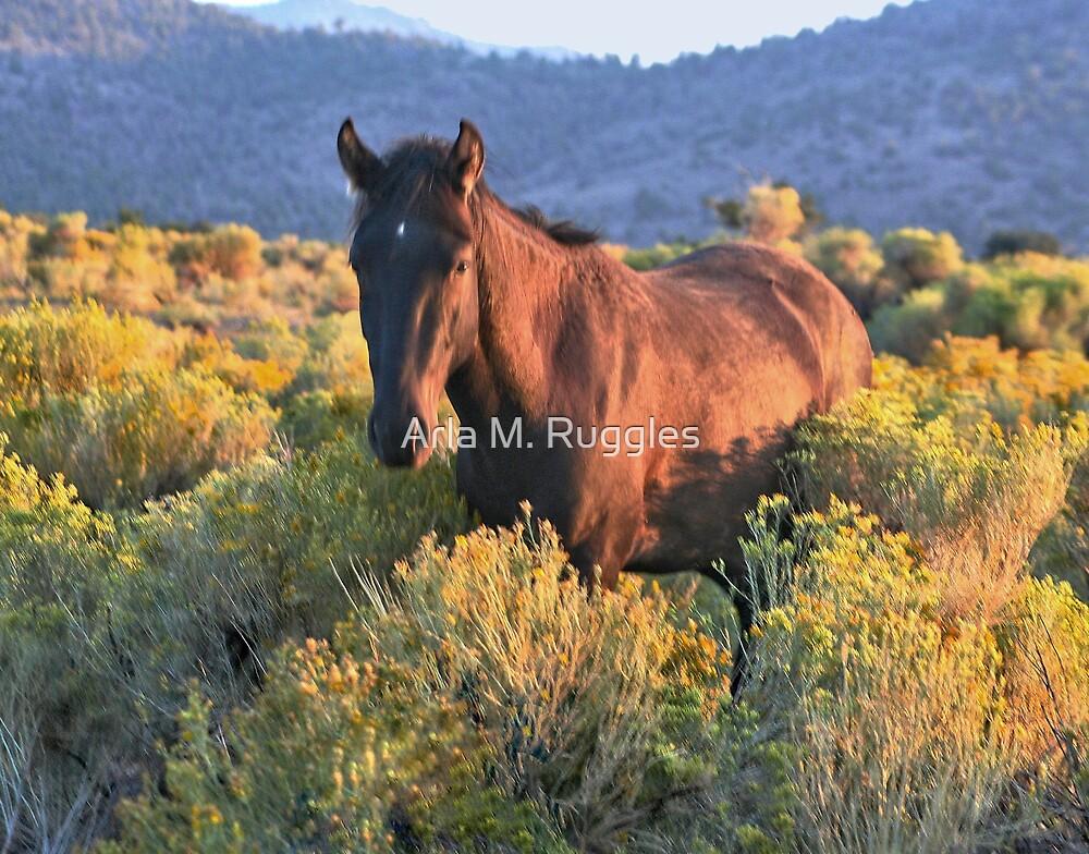 Sage Mustang by Arla M. Ruggles