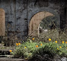 outside Blast Furnace Ruins Lithgow NSW by ozzzywoman