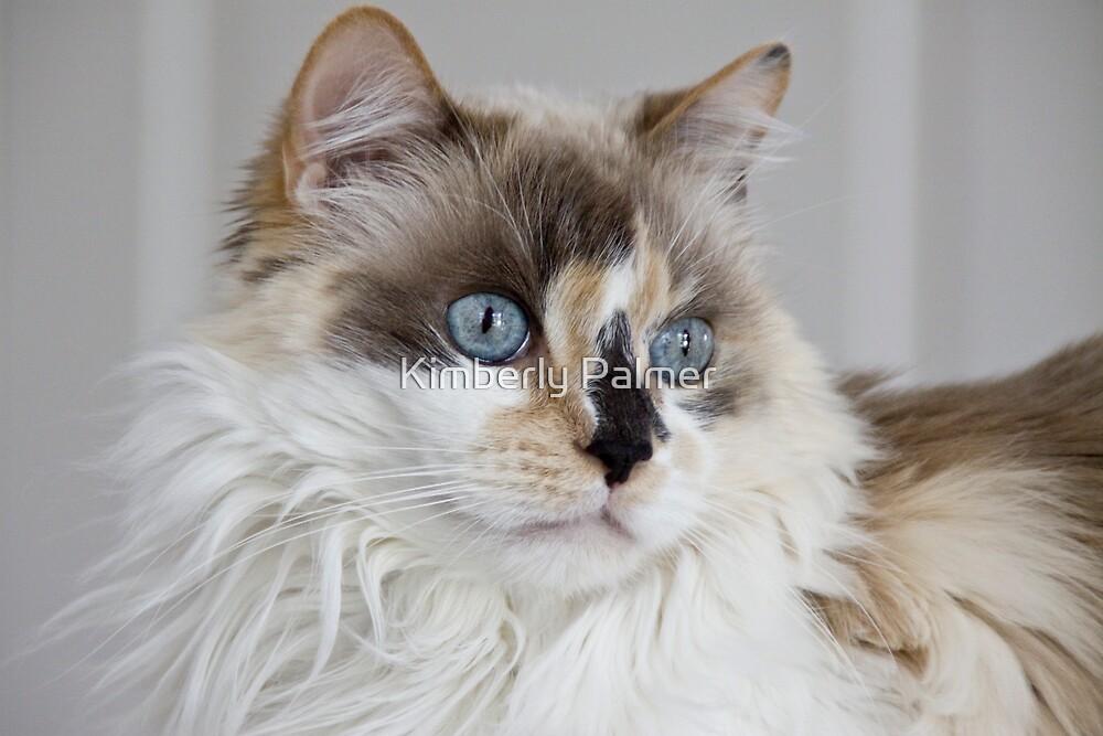 Blue-Eyed Mia by Kimberly Palmer