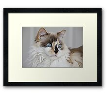 Blue-Eyed Mia Framed Print
