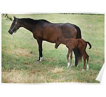 Mom & Baby Horse Poster