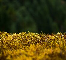 Green Moss by ArtByCarly