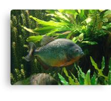 Fishy Tale Canvas Print