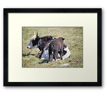 Mother & Baby Cow Framed Print