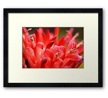 Bubbles of Colour Framed Print