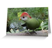 Colourful Feathered Friend Greeting Card