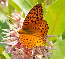 Orange Tiger Butterfly On Pink Flowers by daphsam