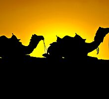 Camels at Sunset Time by Mukesh Srivastava