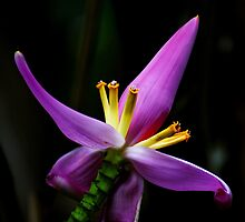 Tropical Flower by Brian Kerls  photography